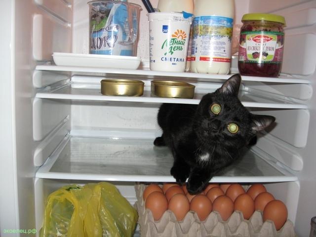 Кот проверяет холодильник