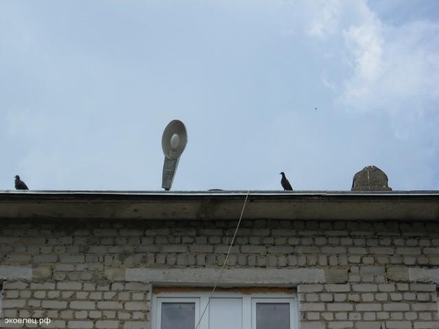 Гуля на крыше