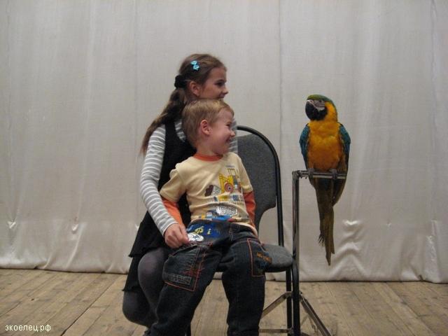 Дети с попугаем ара