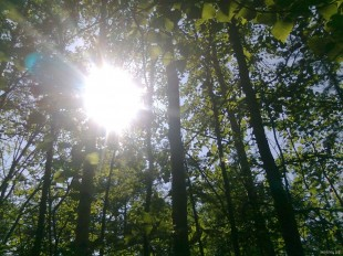 В лесу, остров Сахалин