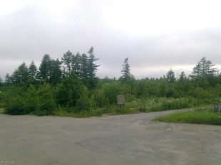 Лес. Вид с дороги