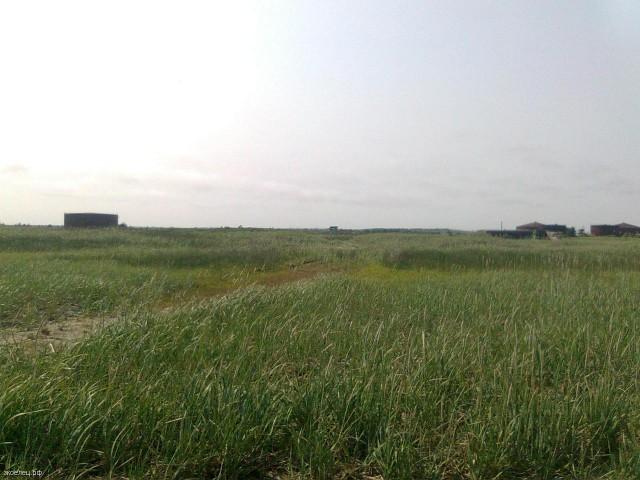 Остров Сахалин. Поле
