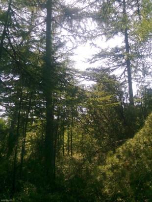 Лес, остров Сахалин