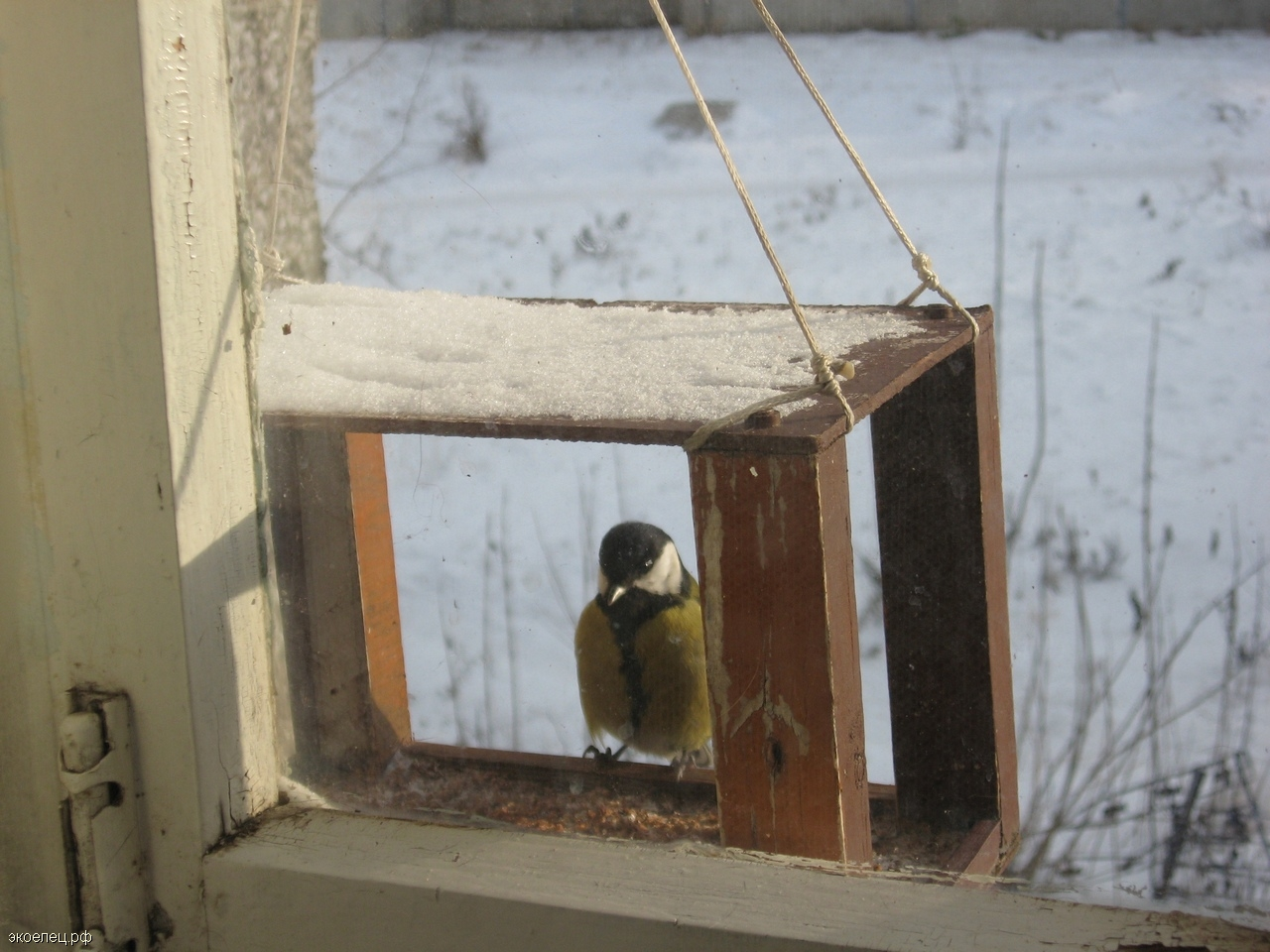 Картинки зимующих птиц кормушек