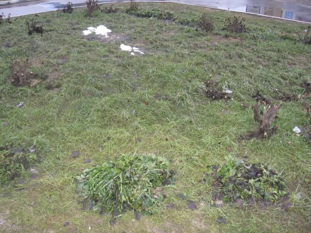 Зеленый газон в январе