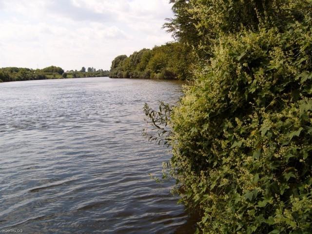 река Сосна в районе Талицы