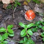 -сентябрь-10г грибы-2 015