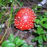 -сентябрь-10г грибы-2 016