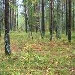 -сентябрь-10г грибы-2 059