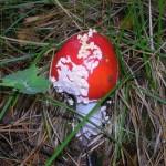 -сентябрь-10г грибы-2 067
