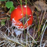 -сентябрь-10г грибы-2 071