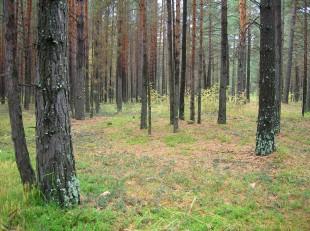 -сентябрь-10г грибы-2 078