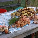 -сентябрь-10г грибы-2 080