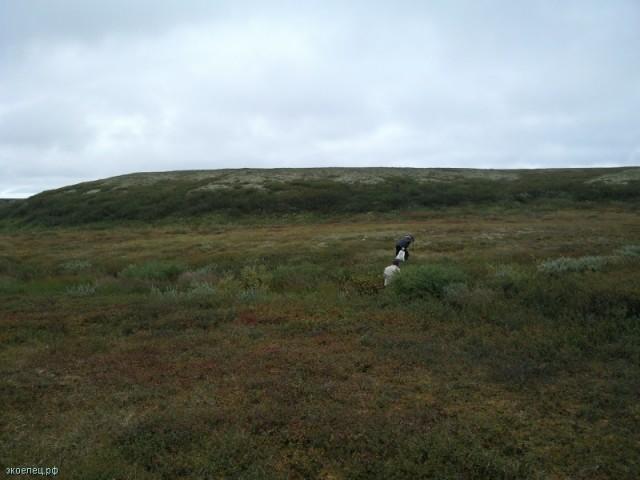 ee-tundra-yamburg-19